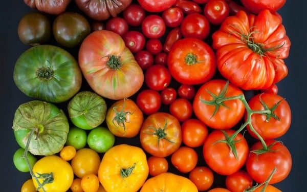 Выбор сорта помидора для хранения