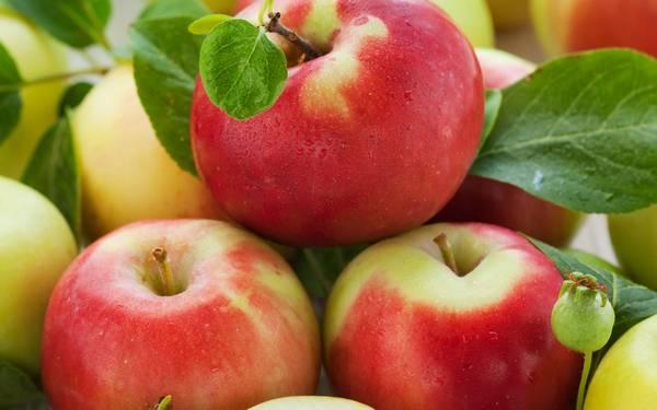 Как правильно сушить яблоки, чтобы заготовка не испортилась в процессе хранения