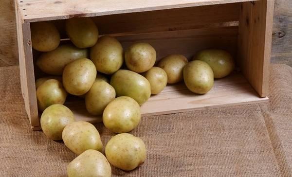 сколько хранить картошку